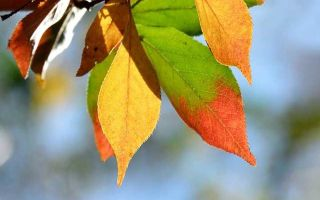 Левитан «поздняя осень» описание картины, анализ, сочинение