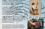 Банджо: история, видео, интересные факты