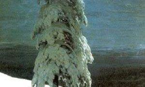 Иван шишкин «на севере диком…» описание картины, анализ, сочинение