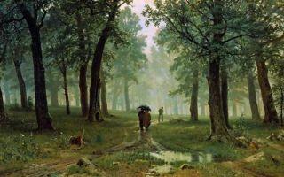 Шишкин «дождь в дубовом лесу» описание картины, анализ, сочинение