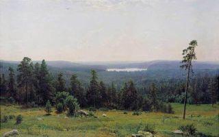 Шишкин «лесные дали» описание картины, анализ, сочинение